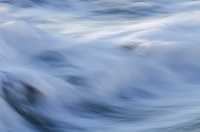 Crinière marine